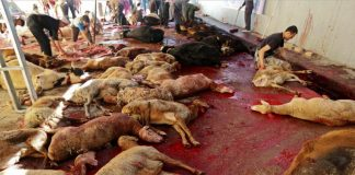 Eid-Al-Adha Slaughters: The Law and the Ground Reality