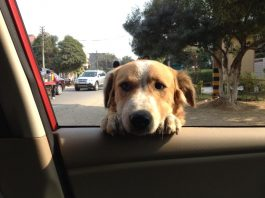 Stray Dogs too have the Right to live- Know the Supreme Court Guidelines
