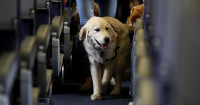 Emotional Support Animals on Flight? Yes, you can take them in some countries