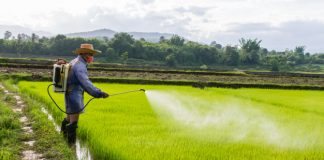 Cancer Alert- India avoids testing for feared Carcinogen in food