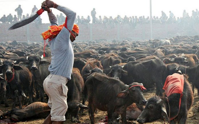 Tripura High Court Bans Animal and bird Sacrifice in Temples